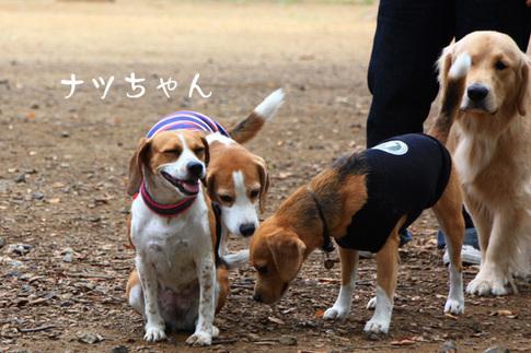 1003代々木公園5.jpg