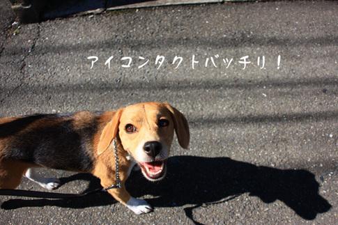 1108秋の多摩川12.jpg